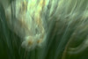 42001153862_e7dbde0877_t