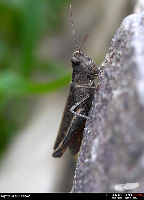 八月外拍北京香山 之二 – 昆虫篇