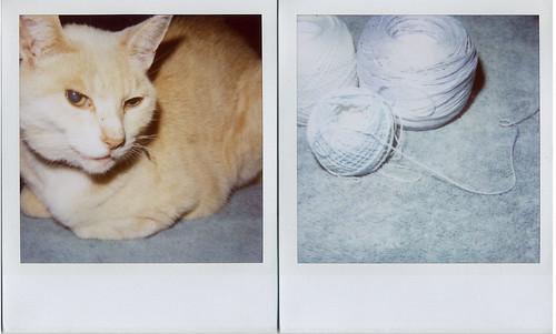 crochet a blue chini