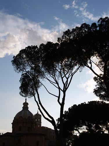 ローマの松