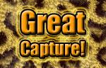 Great Capture's Banner