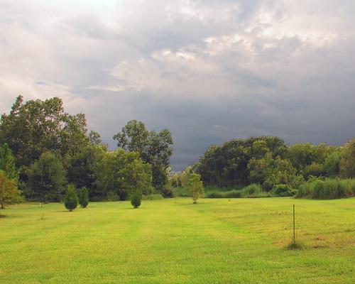 backyard - 0101