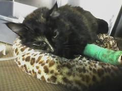 Nina in the Hospital
