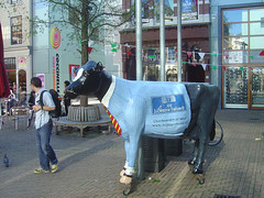 Haagsche Bluf - Cow