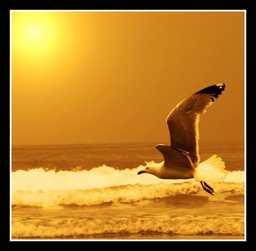 248491234 b1985fe6f0 Fotos para el Concurso  Marketing Digital Surfing Agencia