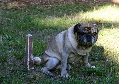 Pug and Faux-Marble Obelisk