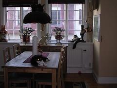 Kattslagsmål liten