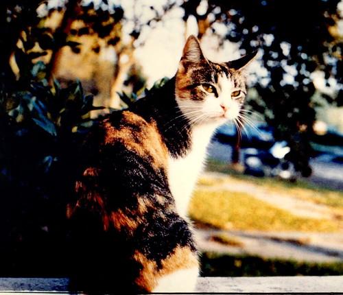 JewelClan cats 388267435_17f2e2424a