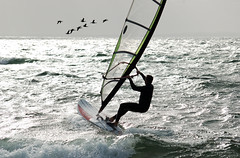 Birds & surf