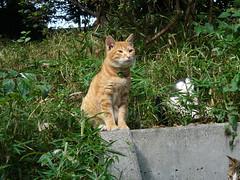 上野の猫#1