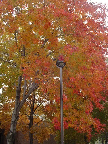 Fall foliage on the Wayne State campus