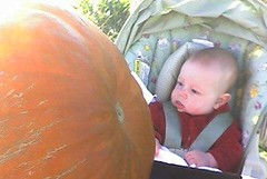 Oh my god, that pumpkin's going to crush me!