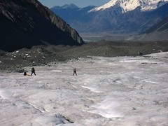 Milking it to the end of the Tasman Glacier