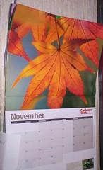 nov calendar 2
