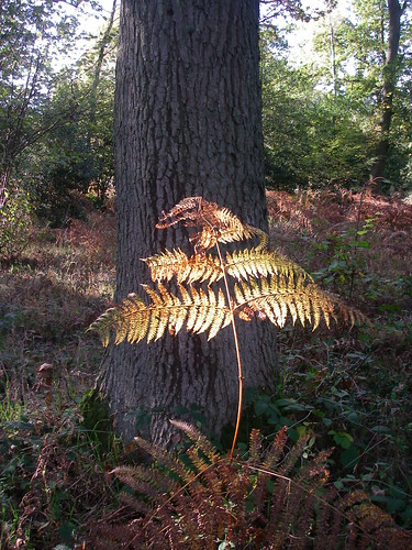 Fern in Autumn Forest