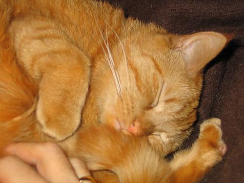 EFIT, 18:18: Couch cuddling