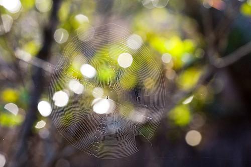 Hello Mr Web