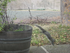 Squirrel in action