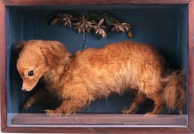 whiskeydog