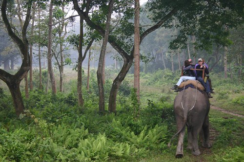 My Dutch companions on the elephant ride through the Chitwan jungle...