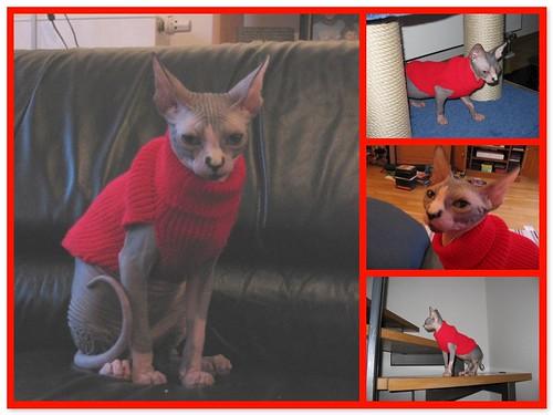Dragonheart's Sweater