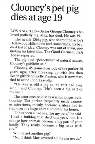 clooney_pig
